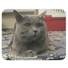 British Shorthair Grey Double Sided Flano Blanket (Medium)