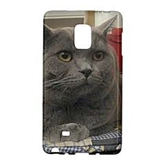 British Shorthair Grey Galaxy Note Edge