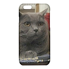 British Shorthair Grey iPhone 6/6S TPU Case