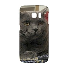 British Shorthair Grey Galaxy S6 Edge