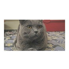 British Shorthair Grey Satin Wrap