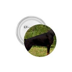 Doberman Pinscher Black Full 1.75  Buttons