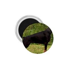 Doberman Pinscher Black Full 1.75  Magnets