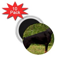 Doberman Pinscher Black Full 1.75  Magnets (10 pack)