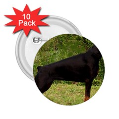 Doberman Pinscher Black Full 2.25  Buttons (10 pack)