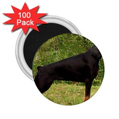 Doberman Pinscher Black Full 2.25  Magnets (100 pack)
