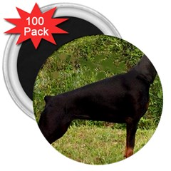 Doberman Pinscher Black Full 3  Magnets (100 pack)