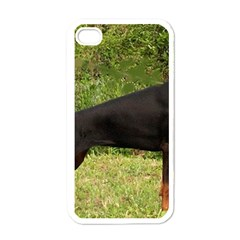 Doberman Pinscher Black Full Apple iPhone 4 Case (White)
