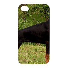 Doberman Pinscher Black Full Apple iPhone 4/4S Hardshell Case