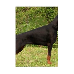 Doberman Pinscher Black Full Small Tapestry