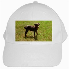 Red Doberman Puppy White Cap