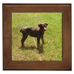 Red Doberman Puppy Framed Tiles