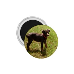 Red Doberman Puppy 1.75  Magnets