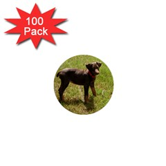 Red Doberman Puppy 1  Mini Buttons (100 pack)