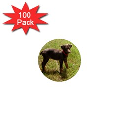 Red Doberman Puppy 1  Mini Magnets (100 pack)