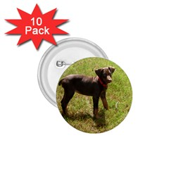 Red Doberman Puppy 1.75  Buttons (10 pack)