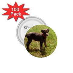 Red Doberman Puppy 1.75  Buttons (100 pack)