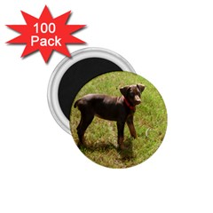 Red Doberman Puppy 1.75  Magnets (100 pack)