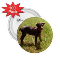 Red Doberman Puppy 2.25  Buttons (100 pack)
