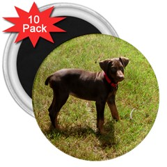 Red Doberman Puppy 3  Magnets (10 pack)