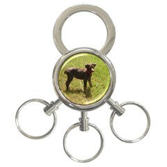 Red Doberman Puppy 3-Ring Key Chains
