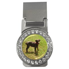 Red Doberman Puppy Money Clips (CZ)