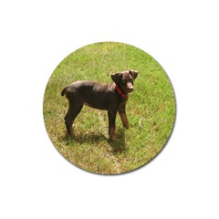 Red Doberman Puppy Magnet 3  (Round)