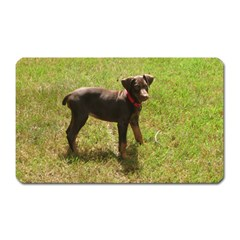 Red Doberman Puppy Magnet (Rectangular)
