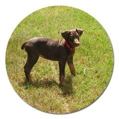 Red Doberman Puppy Magnet 5  (Round)