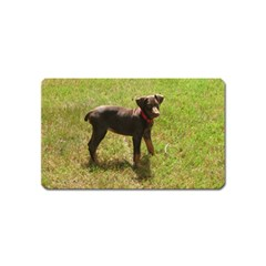 Red Doberman Puppy Magnet (Name Card)