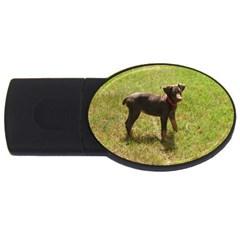 Red Doberman Puppy USB Flash Drive Oval (4 GB)