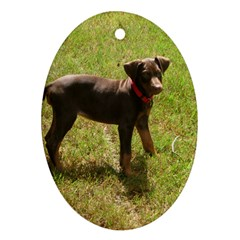 Red Doberman Puppy Oval Ornament (Two Sides)
