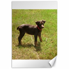 Red Doberman Puppy Canvas 12  x 18