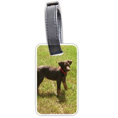 Red Doberman Puppy Luggage Tags (One Side)
