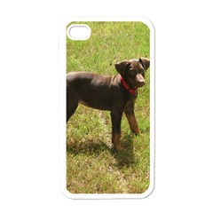 Red Doberman Puppy Apple iPhone 4 Case (White)