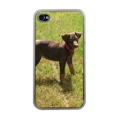 Red Doberman Puppy Apple iPhone 4 Case (Clear)