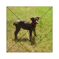 Red Doberman Puppy Acrylic Tangram Puzzle (6  x 6 )