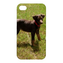 Red Doberman Puppy Apple iPhone 4/4S Premium Hardshell Case