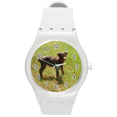 Red Doberman Puppy Round Plastic Sport Watch (M)