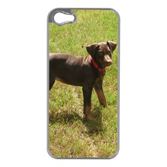 Red Doberman Puppy Apple iPhone 5 Case (Silver)