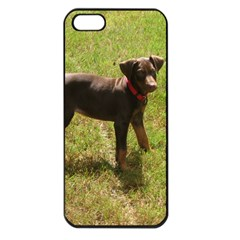 Red Doberman Puppy Apple iPhone 5 Seamless Case (Black)