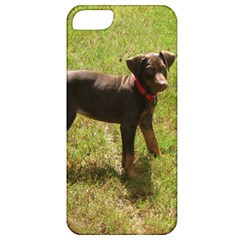 Red Doberman Puppy Apple iPhone 5 Classic Hardshell Case