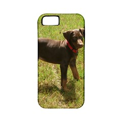 Red Doberman Puppy Apple iPhone 5 Classic Hardshell Case (PC+Silicone)