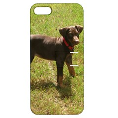 Red Doberman Puppy Apple iPhone 5 Hardshell Case with Stand