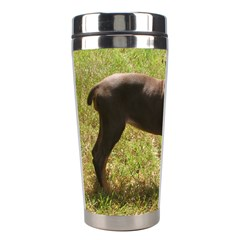 Red Doberman Puppy Stainless Steel Travel Tumblers