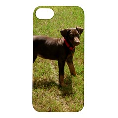 Red Doberman Puppy Apple iPhone 5S/ SE Hardshell Case