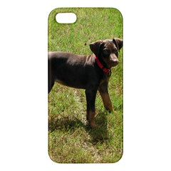 Red Doberman Puppy iPhone 5S/ SE Premium Hardshell Case