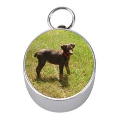 Red Doberman Puppy Mini Silver Compasses
