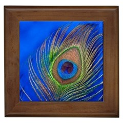 Blue Peacock Feather Framed Tiles