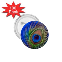 Blue Peacock Feather 1 75  Buttons (100 Pack)